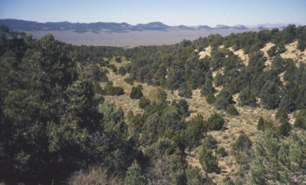 Photo of pinyon-juniper