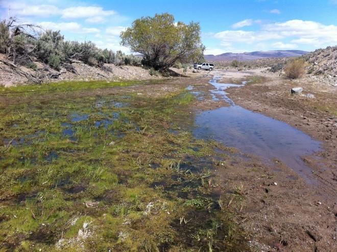 Photo of wetland.