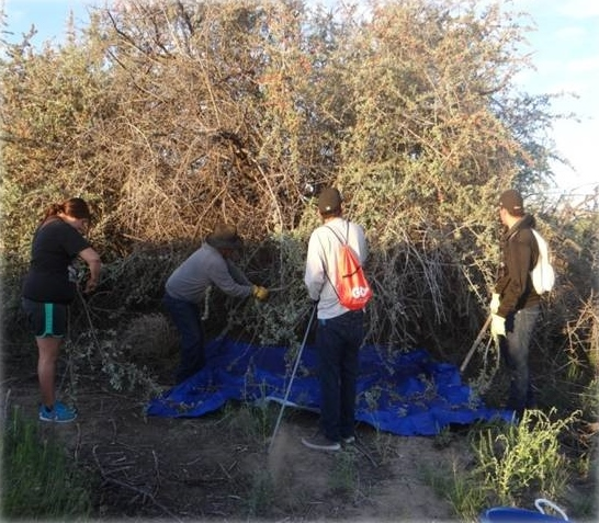 Photograph of tribal youth picking and cleaning buck berries