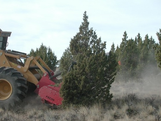Photograph of pinon juniper removal